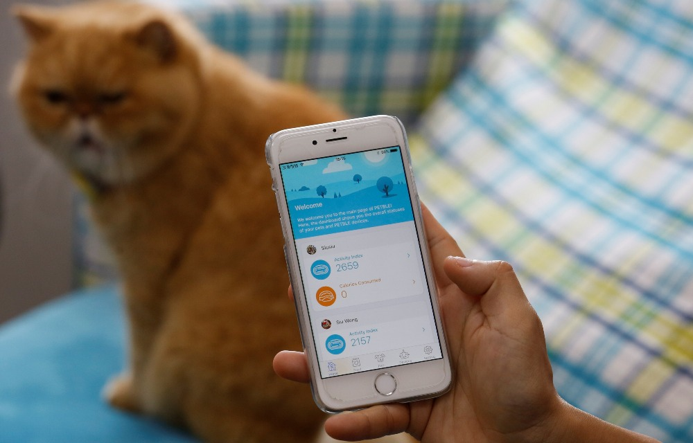 A smartphone app monitors the activity levels of a pet in Hong Kong